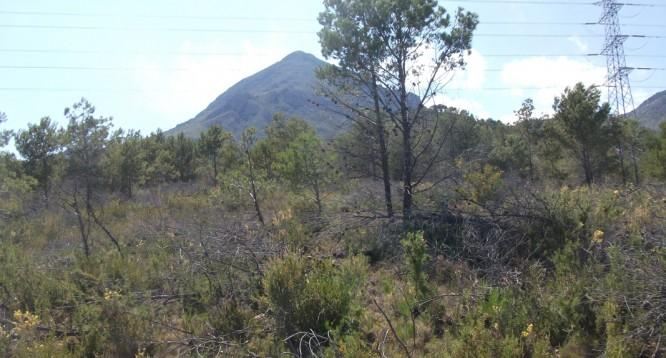 Parcela Pie de Monte en La Nucia (3)