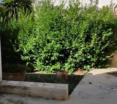 Casa de Pueblo Sant Llorenç en Benilloba (21)